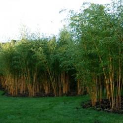 Dárkový poukaz na netradiční stromky, keře a rostliny - 2000 Kč