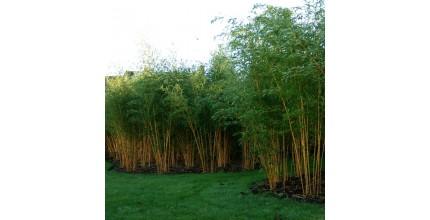 Netradiční stromky, keře a rostliny