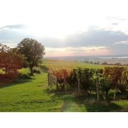 Dárkový poukaz na romantický balíček s degustací vína a piknikem na vinici v hodnotě 3 900 Kč