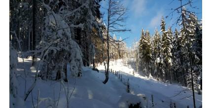Celodenní výprava na sněžnicích Krkonoše